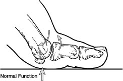 Normal Function of Big Toe