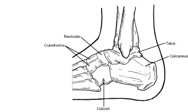 Diagram of Tarsal Bones