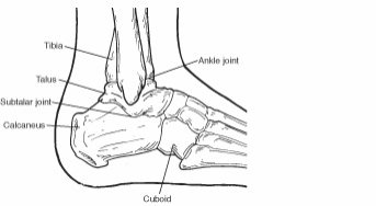 Diagram of the calcaneus and surrounding bones
